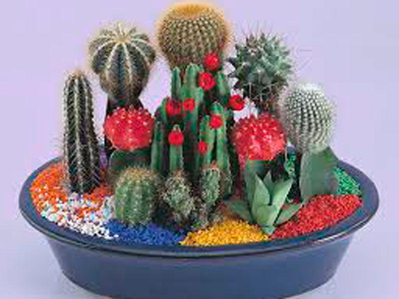¿Cómo hacer un centro de cactus?